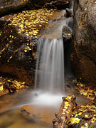 Autumn Gold And Waterfall Print by Leland D Howard