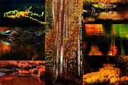 Water Flowing Framed Prints - Autumn Gold Collage Framed Print by Terril Heilman