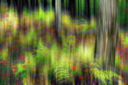 Autumn Grace - A Tranquil Moments Landscape Print by Dan Carmichael