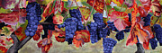 Italian Wine Paintings - Autumn Grape Vines by Sue Birkenshaw