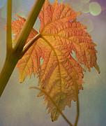 Autumn Grapevine Print by Fraida Gutovich