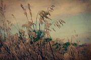 Joy StClaire - Autumn Grasses