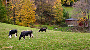 Old Barns Prints - Autumn Graze Print by Bill  Wakeley