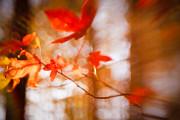 Lisa McStamp - Autumn Gust