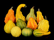 Reflection Harvest Photo Posters - Autumn Harvest Gourds Poster by Jim Hughes