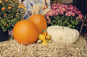 Orange Photos - Autumn Harvest by Heather Applegate