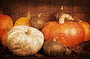 Gourd Posters - Autumn Harvest Textured Poster by Edward Fielding