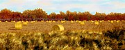 Hay Bales Digital Art Posters - Autumn Hay Poster by Ric Darrell