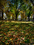 Prescott Photos - Autumn HDR Leaves on the Courtyard by Aaron Burrows