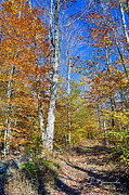 A Gurmankin - Autumn Hickory Run State...