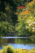 Nature Photograph Prints - Autumn Highlights on the Quinnebaug River Print by Neal  Eslinger