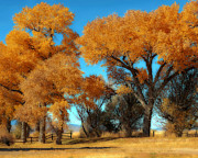 Marcie Adams Eastmans Studio Photography - Autumn Honey Lake Valley