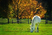 Split Rail Fence Prints - Autumn Horse Print by Don Dennis
