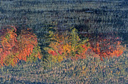 New England Fall Photos Prints - Autumn Impressionism Print by Juergen Roth