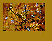 Within A Tree Posters - Autumn in Aerdenhout 2 Poster by Xoanxo Cespon