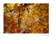 Herfst Digital Art - Autumn in Aerdenhout 3 by Xoanxo Cespon