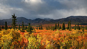 Darlene Bushue - Autumn in Alaska