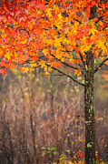 Karol  Livote - Autumn In Connecticut