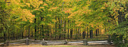 Fence Line Prints - Autumn in Door County Print by Adam Romanowicz