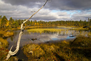 Autumn Scenes Prints - Autumn in Finland near Inari Print by Heiko Koehrer-Wagner