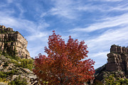 Fall Photos Posters - Autumn In Glenwood Canyon - Colorado Poster by Brian Harig