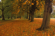 Musa GULEC - Autumn in Hyde Park