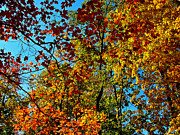 Indiana Autumn Digital Art Prints - Autumn in Indiana Print by Ruth Hager