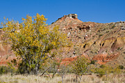 Ashley Mann - Autumn in Palo Duro...