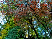 Fall Colors Autumn Colors Photo Posters - Autumn in Raleigh 009 Poster by Lance Vaughn
