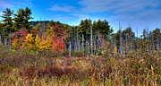 Adirondacks Photo Posters - Autumn in the Adirondacks Poster by David Patterson