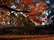 World Changing Prints - Autumn in the Country Print by Inspired Nature Photography By Shelley Myke