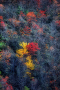 Scenic Woodlands Prints - Autumn In The Mountains Print by Skip Willits