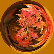 Orbital Framed Prints - Autumn in the Round Framed Print by Anne Gilbert