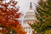 United States Capitol Dome Posters - Autumn In The US Capitol Poster by Susan Candelario