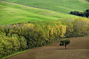 Italian Landscapes Prints - Autumn in Val DOrcia Tuscany Italy Print by Robert Leon
