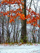 Autumn Scenes Metal Prints - Autumn in Winter Metal Print by Julie Dant