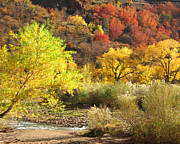 Photos Of Autumn Prints - Autumn in Zion Print by Alan Socolik