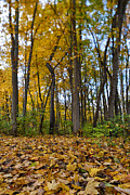 Pure Michigan Framed Prints - Autumn is Here Framed Print by Sebastian Musial