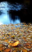 Creativity Art - Autumn Lake by Steven Milner