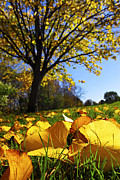 Backlit Photo Posters - Autumn landscape Poster by Elena Elisseeva