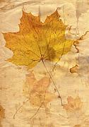 Macro Digital Art - Autumn Leaf In Grunge Style by Michal Boubin