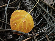 Sandee Gass - Autumn Leaf