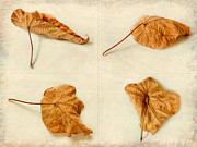 Photo Collage Prints - Autumn Leaf Study Print by Linde Townsend