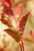 HJBH Photography - autumn leaf with water drops