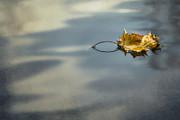 Yelena Rozov - Autumn Leaf