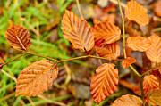 Natural Ocean Life Originals - Autumn leafs by Tommy Hammarsten