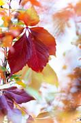 Jenny Rainbow - Autumn Leaves Abstract