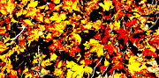 Yellow Leaves Digital Art Prints - Autumn Leaves Print by Barbara Snyder