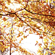 Autumn Leaf Photo Metal Prints - Autumn Leaves Metal Print by Blink Images