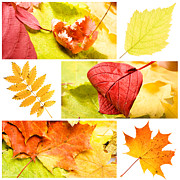 Bright Colors Pyrography Metal Prints - Autumn Leaves Metal Print by Boon Mee